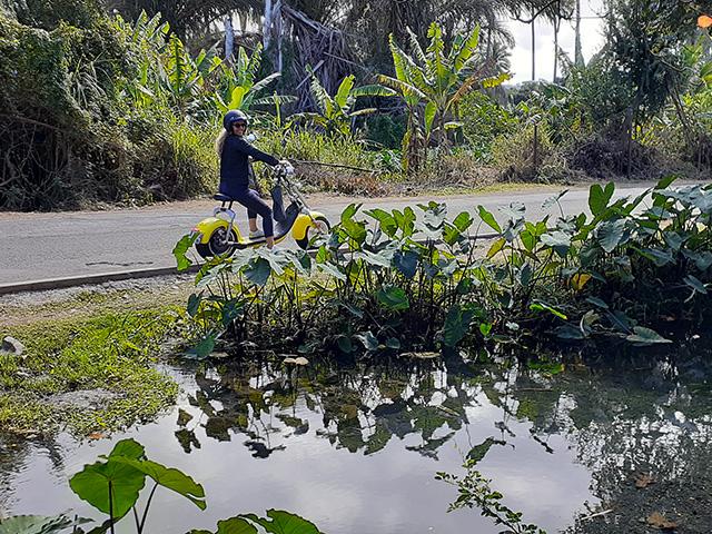 Woolib-Run : éco-tour St Paul Tour des Roches (La Réunion-